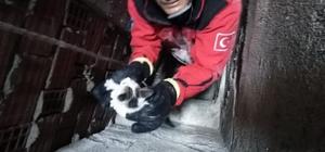 Burhaniye'de itfaiyeden kedi kurtarma operasyonu