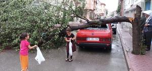 Aşırı yağış ve rüzgar ağacı otomobilin üstüne devirdi