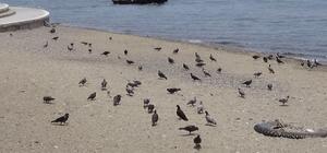 Sahiller kuşlara kaldı