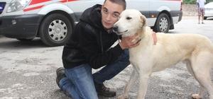 Köpeğini kurtarmak isterken mahsur kaldı
