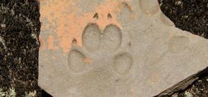 Latmos'ta bin yıllık hayvan izi
