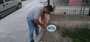 Büyükşehirden sokak hayvanları için su kapları