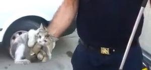 Mahsur kalan yavru kedi kurtarıldı
