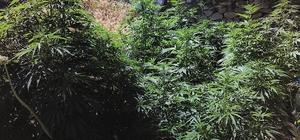 Çankırı'da kaçak sigara ve kenevir bitkisi ele geçirildi