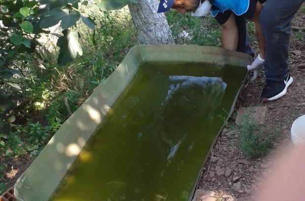 Sivrisineklerin ürediği su dolu bidonlar boşaltılıyor