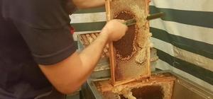 Akçakoca'da kestane balında hasat zamanı