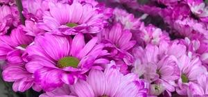 """Yaz ayları ve düğün sezonu çiçekçilerin yüzünü güldürmedi Çiçekçiler piyasada ki durgunluktan şikayetçiler 38 yıllık çiçekçi Mustafa Tan: """"Her sene geçen seneyi arıyoruz"""""""