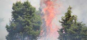 Konya'da orman yangını Beyşehir ilçesinde ormanlık alanda çıkan yangın büyümeden söndürüldü