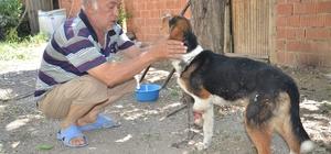 Yaban hayvanlarının yaraladığı av köpeğine şefkat eli uzandı Kahramanmaraş'ta sol ön ayağı yabani hayvanlarca parçalanan av köpeğine, Elbistan Hayvanları Koruma Derneği gönüllüsü Murat Taş ve ailesi sahip çıktı