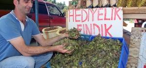 Yaş fındık pazara indi Giresun'da normal hasat döneminin başlamasına yaklaşık 1 ay kala, bazı üreticiler 2018 ürünü yaş fındığı satmaya başladı