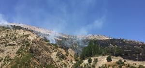 Adıyaman Malatya arasında orman yangını