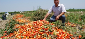"""Salçalık domatesin ekimi yüzde 50 düştü Kırmızı altın olarak adlandırılan salçalık domateste hasat zamanı Salihli Ziraat Odası Başkanı Necati Aktürk: """"Domates ekimi yüzde elli düştü"""" Üretici Sefer Akkuş: """"Kırmızı altın inşallah yüzümüzü güldürür"""""""