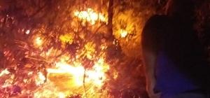 Gerger ilçesinde orman ve bahçe yangını