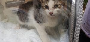 Su kuyusuna düşen kedi yavrusunu AFAD ekipleri kurtardı