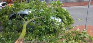 Fırtınada devrilen ağaç dalı otomobilin üzerine düştü