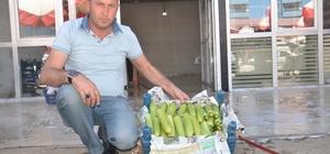 Rusya'ya Elbistan kabağı Kahramanmaraş'ın Elbistan ilçesinden Rusya'ya 100 ton kabak ihracatı yapıldı