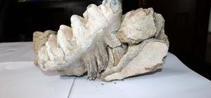 Yozgat'ta 9 milyon yıllık 'mamut' fosili bulundu Yozgatlı çiftçinin tarlasından mamut fosili çıktı