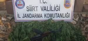 Siirt'te kalaşnikof silah ve kenevir bitkisi ele geçirildi