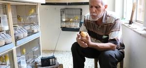 Kuşlarına Türk Sanat Müziği dinletiyor 50 yıllık kuş tutkunu Nusret Sapsız, 50 civarındaki kuşunu müzik eşliğinde besliyor
