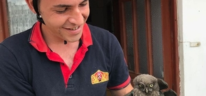Bacaya sıkışan yavru baykuşu itfaiye kurtardı