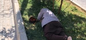 Diyarbakır'da sıcaklardan bunalan yaşlı adam refüje yattı