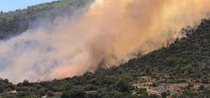 Anızdan ormana sıçrayan yangın rüzgarın etkisiyle büyüdü