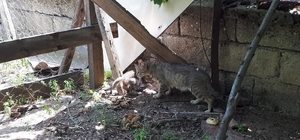 7 metrelik kuyuya düşen kedi itfaiye ekiplerince kurtarıldı