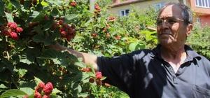 Giresunlu çiftçi, yenilikçi çalışmalarıyla örnek oldu