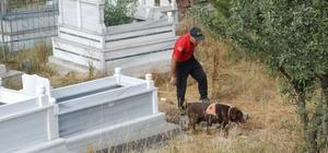 Evrim'i, kadavra köpeği Mavi mezarlıkta aradı