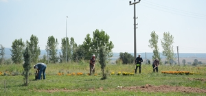 Dinar'da orta refüjler ve döner kavşaklara düzenleme ve bakım yapıldı