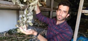 Kullanılmayan köy evleri ipek böceği besim evlerine dönüştürülüyor