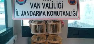 Van'da kafes avcılığı yapan 2 kişiye para cezası verildi