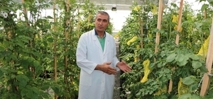 Üniversite 'mor patates' geliştirdi Niğde Ömer Halisdemir Üniversitesinin sıradaki hedefi kırmızı ve pembe patates geliştirmek