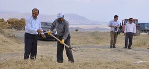 Arguvan'da nohut hasadı başladı