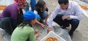 Ağbaba'dan mevsimlik tarım işçileri için araştırma önergesi