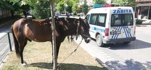 Zabıta at sahibini aradı