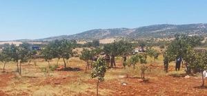 Ailesini katlederek intihara teşebbüs etti Adıyaman'da arazi paylaşımı yüzünden bir kişi 5 kişiyi katlederek intihara teşebbüs etti