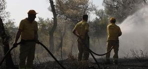 Manisa'da orman yangını 50 dönüm ormanlık arazi zarar gördü