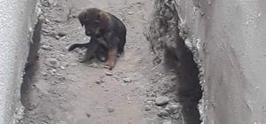 Çenesi kırılan yavru köpek için seferberlik