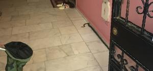 Silivri'de apartmana giren yılan paniğe neden oldu