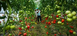 Büyükşehirden çiftçilere sera desteği