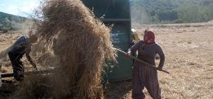 Tokat'ta buğday rekoltesinde düşüş