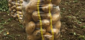 Yozgat'ta patates ve soğan hasadı devam ediyor