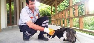 Hasta balıkçıl kuşuna itfaiye sahip çıktı