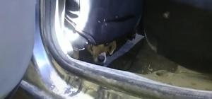 Otomobilin içinde sıkışan köpek kurtarıldı
