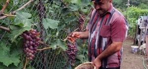 Muhtardan örnek bahçe Giresun'un Aksu Mahalle muhtarı Adem Önal, kurduğu örnek bahçede sebze ve meyve yetiştirerek vatandaşları tarımsal üretime yönlendirmeye çalışıyor