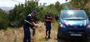 Kanadı kırık leyleği hayata tutundurmaya çalıştılar Jandarma aracına alıp veterinere götürdüler