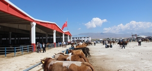 Erzurum'dan batıya kurban sevkiyatı başladı