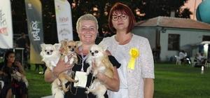 Köpekler birincilik için yarıştı