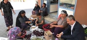 Belediye Başkanı Tahmazoğlu patlıcan oydu